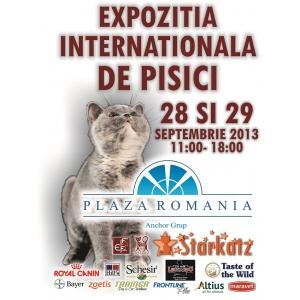 sute-de-pisici-din-rase-exotice-la-plaza-romania