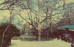 Cismigiu arbore