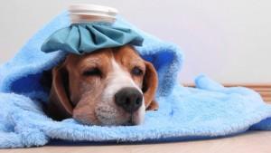Ministerul Sanatatii se declara pregatit sa faca fata gripei de sezon
