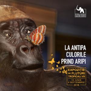"Culorile prin viata la ""Antipa"""