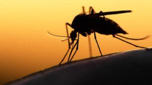 10% din femeile infectate cu Zika au nascut un copil cu o malformatie